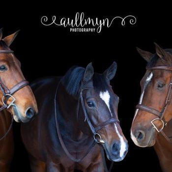 Meet my equine babies ♥️