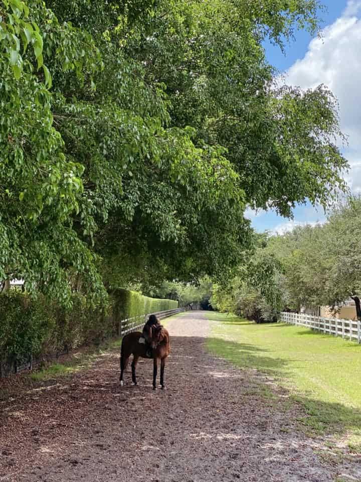 horses bring comfort during Coronavirus pandemic